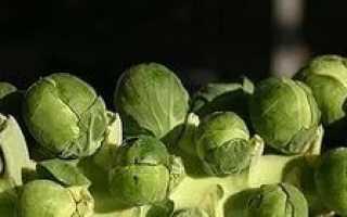 Вирощування брюссельської капусти з насіння — багатодітна капуста!