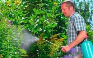 Боротьба з бур'янами на городі, як боротися, методи