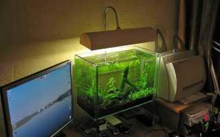 Підсвічування акваріума — як зробити, лампи освітлення для рослин, відео