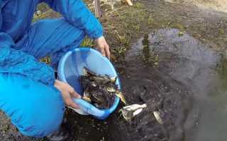 Риба — правила і терміни запуску в ставок, норматив запуску на 1 квадратний метр, відео