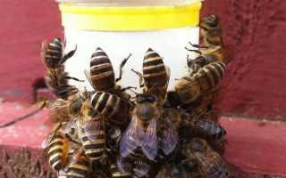 Поїлка для бджіл з Китаю — правила використання на пасіці, ціна, відео