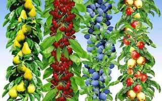 Колоновидні плодові дерева — саджанці для Краснодара, Підмосков'я, сорти, особливості догляду та обрізки, фото, відео
