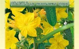 Бджолозапильні огірки: як вибрати урожайний гібрид