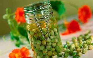 Каперси з насіння настурції — рецепти приготування маринованих і солоних каперсів, відео
