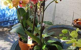 Як пересадити орхідею в інший горщик в домашніх умовах і забезпечити догляд, покрокова інструкція, відео