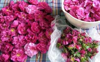 Як застосовувати пелюстки троянд в домашніх умовах