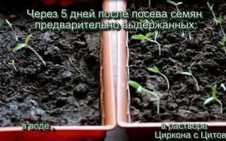 Препарат цитов — використання для насіння і розсади, відео