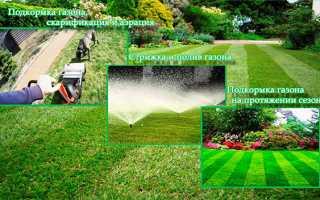 Догляд за газоном круглий рік, підгодівля, стрижка, полив, аерація і скарифікація, відео