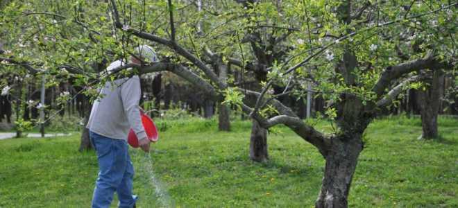 Підживлення плодових дерев і чагарників навесні — вибираємо добрива