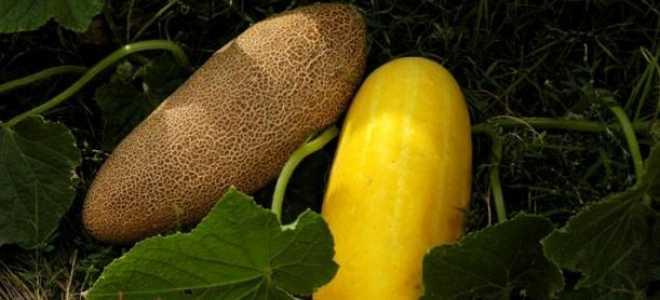 Вирощуємо свої насіння самі