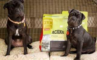 Акана — корм для собак і кішок, цуценят, відео