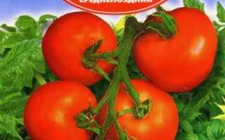 Томат Толстой F1: характеристика і опис сорту, його врожайність і рекомендації по вирощуванню