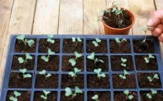 Що посадити в квітні на розсаду Які овочі та квіти сіяти в прілого 2019