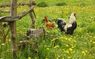 Червень — заготівля зелених кормів для тварин, відгодівля молодої птиці, відео