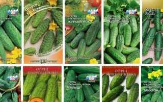 Кращі сорти огірків для відкритого грунту, насіння огірків. Сорти для Підмосков'я, Середньої смуги, Уралу, Сибіру.