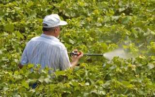 Обробка винограду навесні мідним купоросом, як розводити, дозування, відео