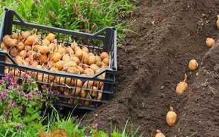 Після чого садити моркву у відкритому грунті. Що садити після моркви на наступний рік?