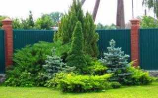 Особливості клумби з хвойних рослин — схеми, відео, фото