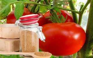 Підживлення розсади помідор дріжджами — технологія внесення добрив