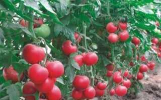 Детермінантний і індетермінатний сорт помідорів — що це?