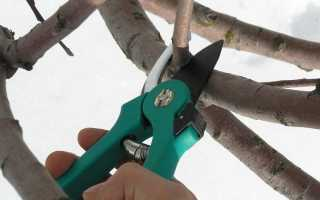 Обприскування саду від хвороб і шкідників навесні: чим і як обробити дерева