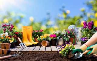 Місячний календар посіву квітів в травні. Терміни посіву та посадки декоративних рослин