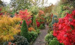 Осінній сад — красиві, незвичайні дерева і кущі, відео