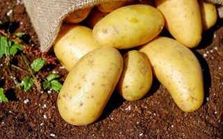 Огляд недорогих засобів для передпосівної підготовки картоплі від хвороб і шкідників