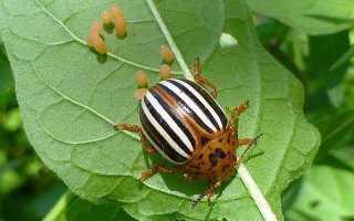 Рейтинг коштів від колорадського жука