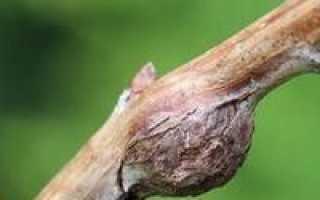 Обробка малини навесні від хвороб і шкідників. Догляд за малиною навесні