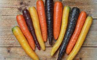 Ранні сорти моркви: Абако, Оленка, Амстердамська …