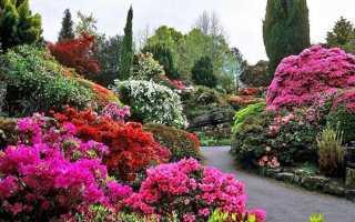 Квітучі чагарники — осінні, з білими, блакитними квітами, відео