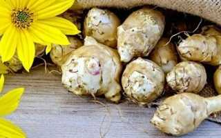 Вирощування земляної груші (топінамбура), відео