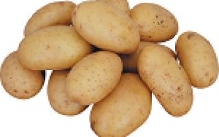 Обробка бульб картоплі перед посадкою від колорадського жука