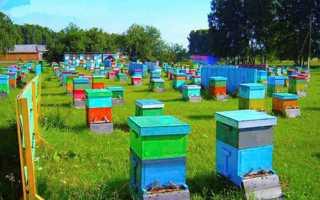 Бджільництво — організація пасіки для отримання прибутку і розвитку бізнесу, відео