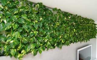 Швидкозростаючі кімнатні рослини — підбірка кращих рослин для будинку, відео