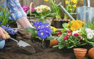 Роботи в травні на клумбах, пересадка багаторічників, висадка розсади однорічних рослин, відео