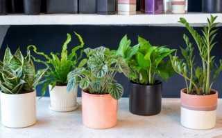 Купівля кімнатних рослин: від очевидностей до несподіваних питань. Вибір, перевірка, транспортування