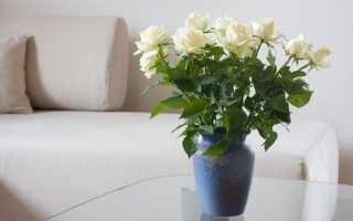 Як доглядати за трояндами у вазі з водою: корисні поради, відео