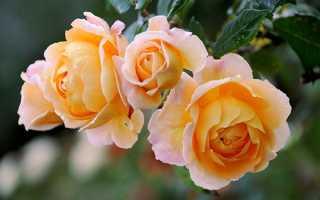 Осінні багаторічні квіти для клумби — фото і назви, відео