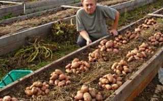 Як зібрати мішок картоплі з 1м2 площі -відео