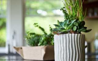 8 кращих кімнатних рослин для кухні. Які вибрати? Список, фото