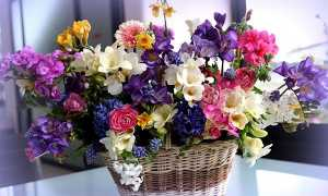 Квіти для букетів — фото і назви популярних кольорів, складання композиції, відео