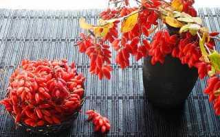 Варення з барбарису на зиму — рецепти приготування, корисні властивості, відео