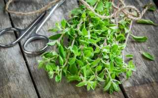 Майоран — все про вирощування і застосуванні. Корисні властивості, протипоказання. фото
