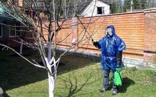Обробка саду по весні в 2019 році: чим необхідно обприскувати від хвороб і шкідників чагарники і дерева в в квітні  