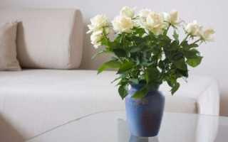 Як зберегти троянди: вибір вази, підготовка квітів і води, відео