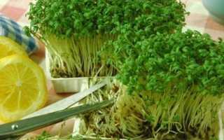 Салат — вирощування і догляд у відкритому грунті: фото, відео
