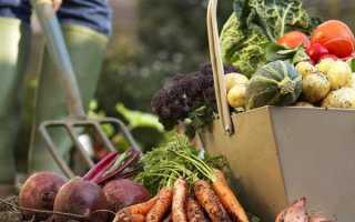 Найкорисніші і поживні овочі для дачних грядок — думка зарубіжних фермерів