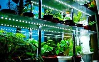 Як організувати освітлення для розсади будинку відео, світлодіодні лампи для досвічування розсади, які лампи вибрати для освітлення розсади будинку,